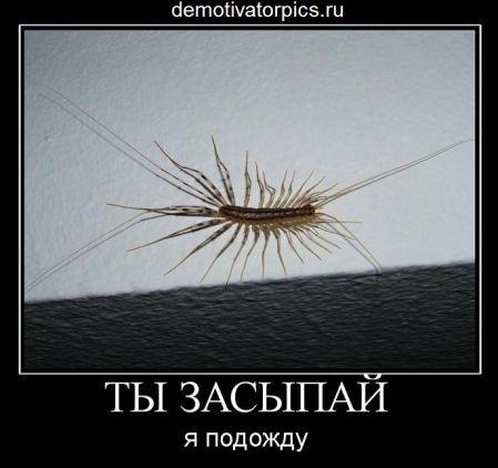 фото сороконожка мухоловка